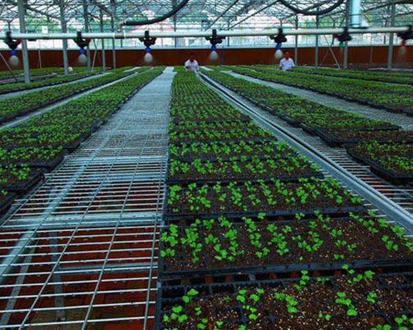 自动化灌溉