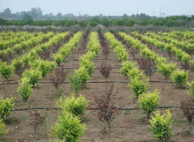 平山县农业绿色发展先行区项目