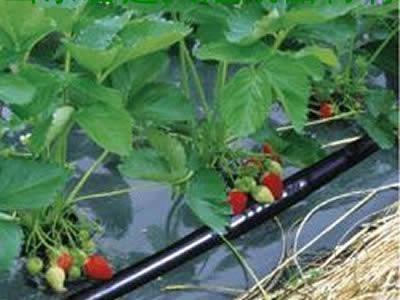 草莓滴灌管