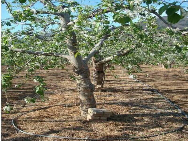 果树滴灌管