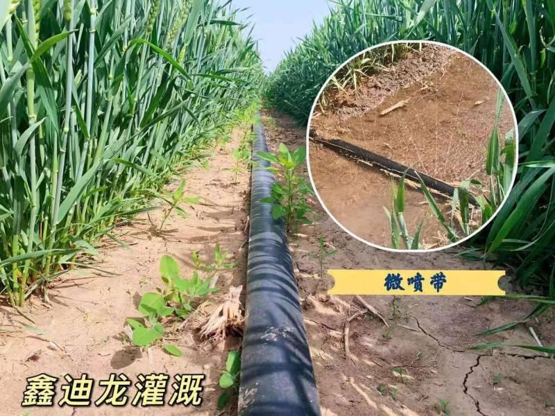 赵县新建农场